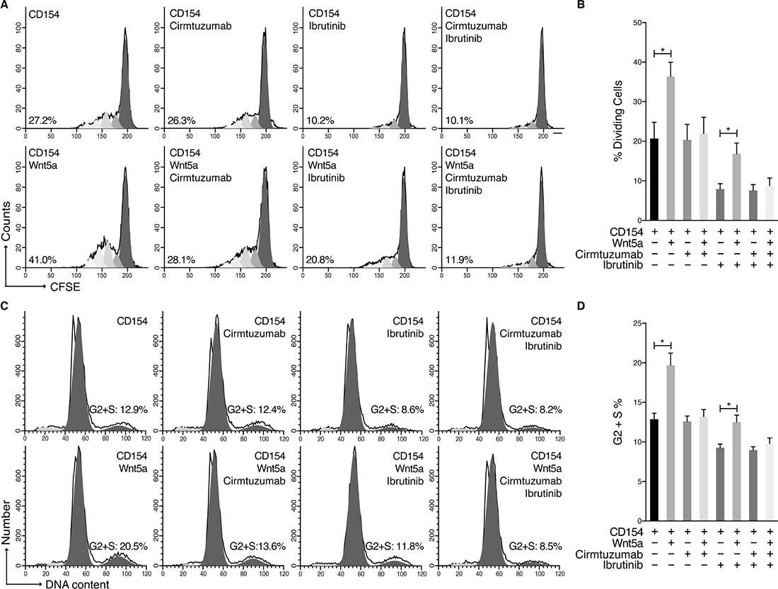 Cirmtuzumab inhibits Wnt5a-enhanced proliferation in ibrutinib-treated MCL Cells.