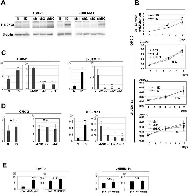 Role of P-REX2a in endometrial carcinoma cell lines.