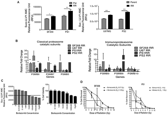RR cells display enhanced proteasome activity and survival dependency on proteasomes in vitro.