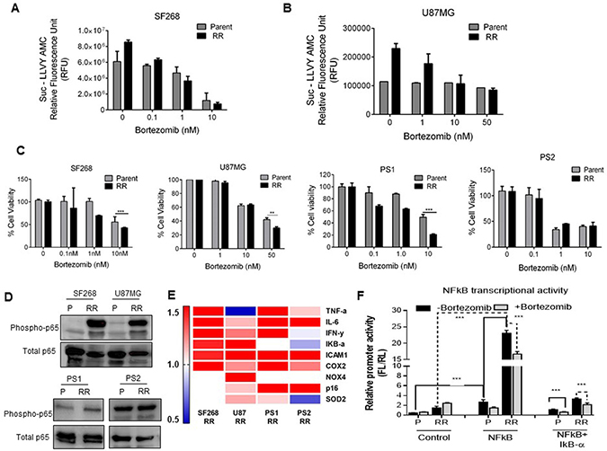 Proteasomes indirectly regulate RR cell survival via the NFkB activation.