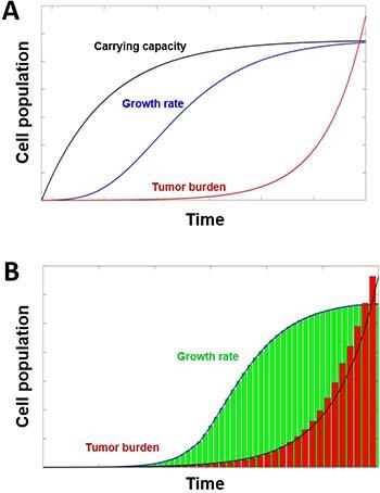 Tumor growth models.