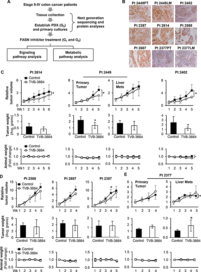 Effect of TVB-3664 on tumor growth in CRC PDX models.