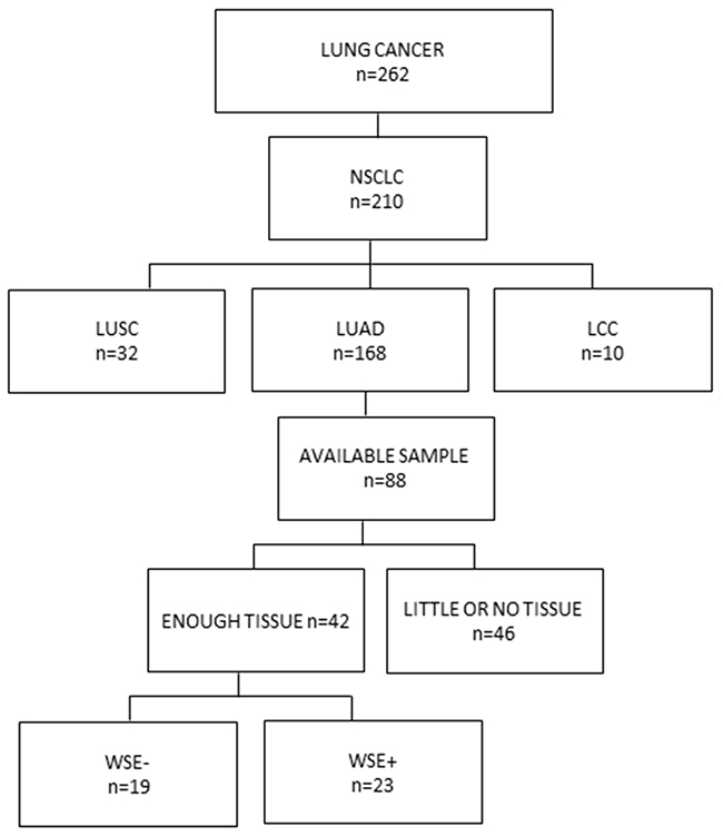 Consort diagram of patients included in the study.