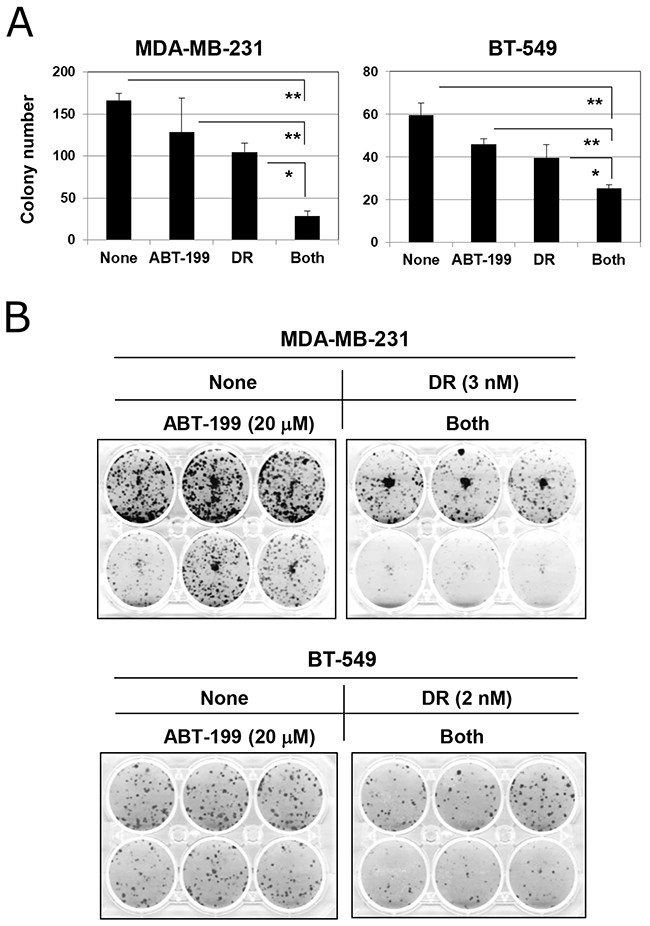 Combination treatment with DR and ABT-199 impaired the colony-forming ability of TNBC cells.