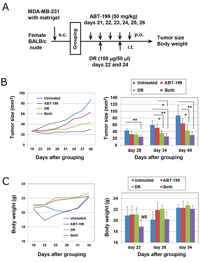 Combination treatment with DR and ABT-199 suppressed the growth of MDA-MB-231 cells in vivo.