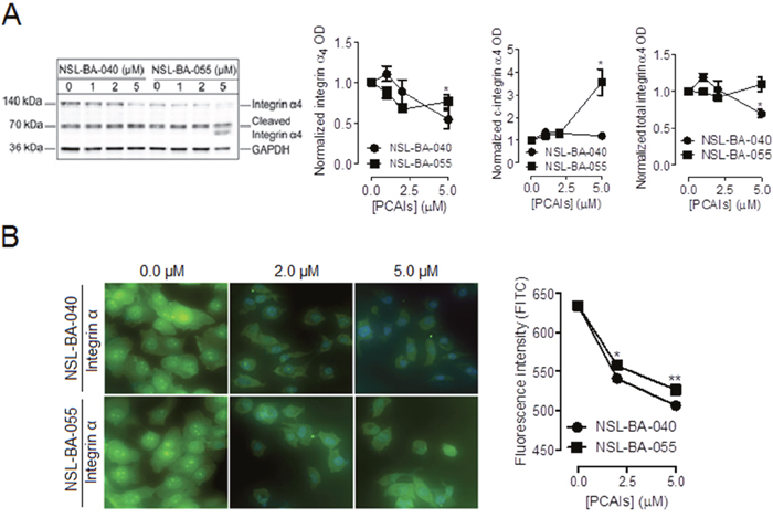PCAIs diminish the levels of integrin α4.