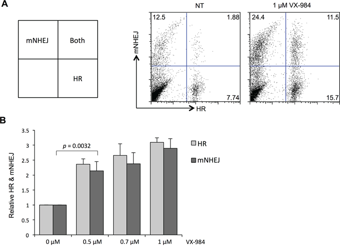 Altered use of DSB repair pathways in EJ-DR cells following VX-984 treatment.