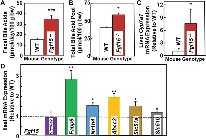 Increased fecal bile acids, total bile acid pool, and expression of hepatic Cyp7a1 and genes related to bile acid transport in FGF15-deficient mice.