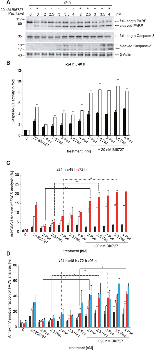 The combinatorial treatment of BI6727 and paclitaxel induces pronounced levels of apoptosis.