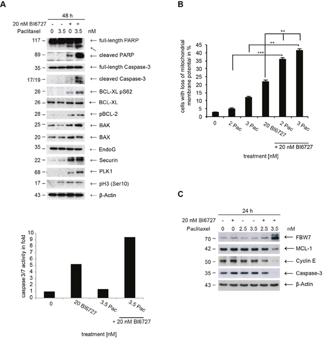 Analysis of apoptotic signaling in ovarian cancer cells.