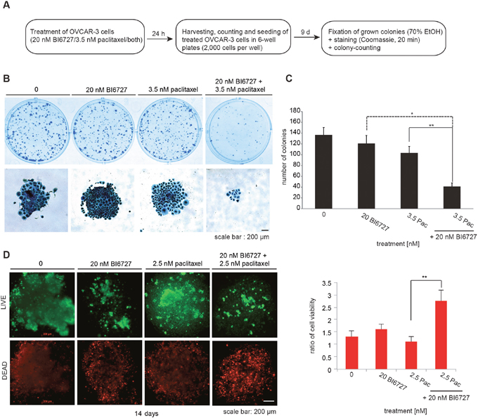 Combinatorial treatment of OVCAR-3 cells with 20 nM BI6727 and 3.