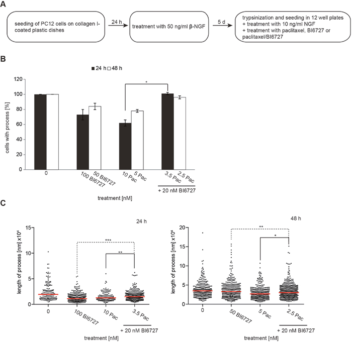 The combinatorial treatment of paclitaxel and BI6727 reduces neurotoxicity.