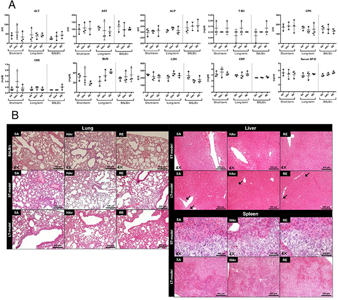 Blood biochemical data and lung, liver, and spleen histopathology of the short-term and long-term humanized mouse models and BALB/c mice.