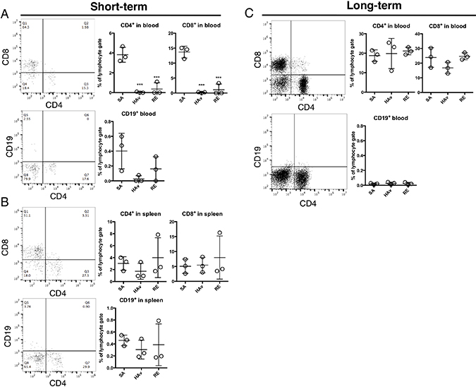 Retention of human immune cells in the lungs of humanized mouse models.