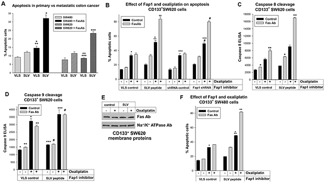 Fap1-inhibition increased Fas or oxaliplatin induced apoptosis in CD133+ colon cancer cells.