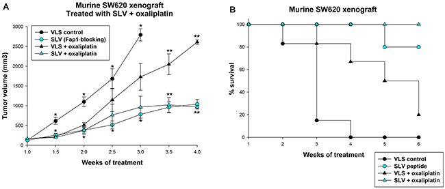 Fap1-inhibition decreases tumor growth in a murine xenograft model of colon cancer.