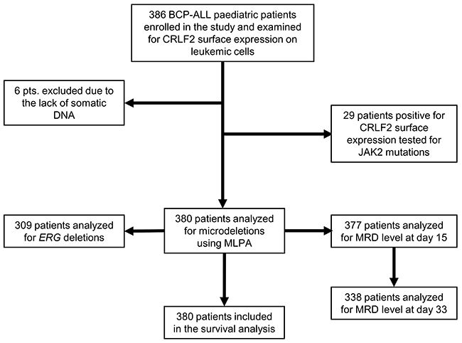 Flowchart shows selection strategy and classification of pediatric BCP-ALL patients at diagnosis and at days 15 and 33 of the treatment.