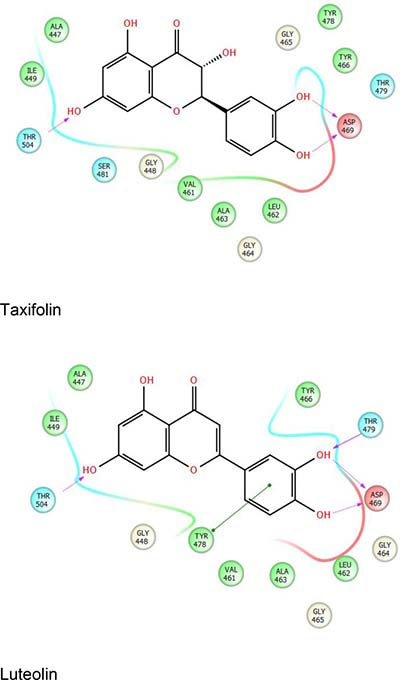 Representative ligand interaction diagrams with taxifolin (top) and luteolin (bottom) with the SRA domain of UHRF1.