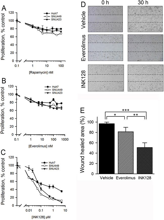 INK128, but not allosteric mTOR inhibitors, show enhanced activity in SNU423 and SNU449 HCC cells.