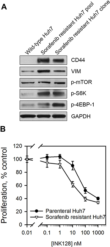 Sorafenib resistant cells display enhanced mTOR pathway activation and improved sensitivity to INK128.
