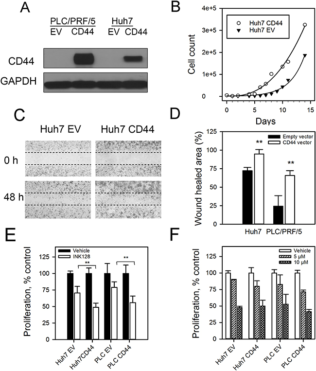 CD44 overexpressing cells have a more aggressive phenotype and improved response to INK128.