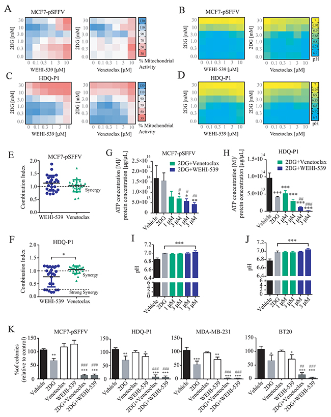 Combination treatment of 2DG with WEHI-539 or Venetoclax alters pH levels and mitochondrial activity and decrease clonogenic activity in breast cancer cell lines.