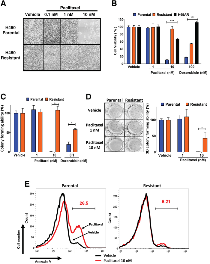 Establishment of paclitaxel resistant H460 lung cancer cells and their cross resistance to doxorubicin.
