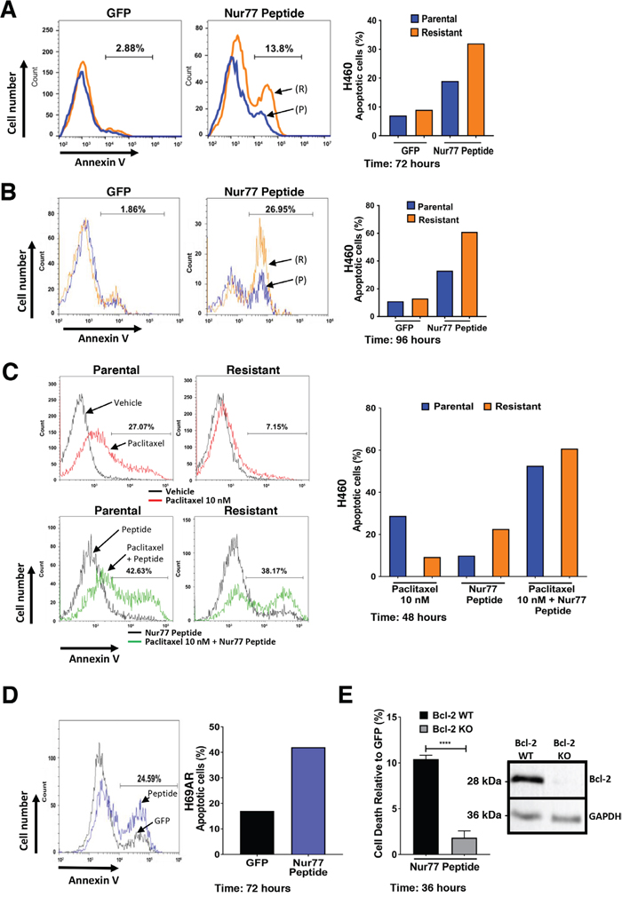 Expression of Nur77 derived peptide in H460 cells induces apoptosis preferentially in paclitaxel resistant H460 lung cancer cells.