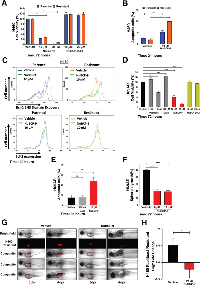 NuBCP-9 suppresses H460 paclitaxel resistant lung cancer cell growth in a xenograft zebrafish model.