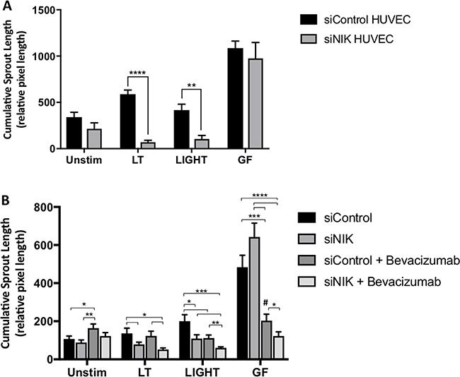 Targeting NIK in HUVEC attenuates angiogenesis in the 3D tumor stroma model.