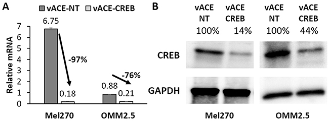 Quantification of the efficiency of knockdown in Mel 270 and OMM2.5 infected cell.