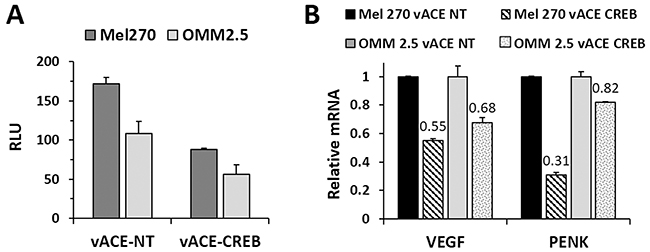 Functional analysis of the effect of CREB knockdown in Mel 270 and OMM2.5 infected cell.