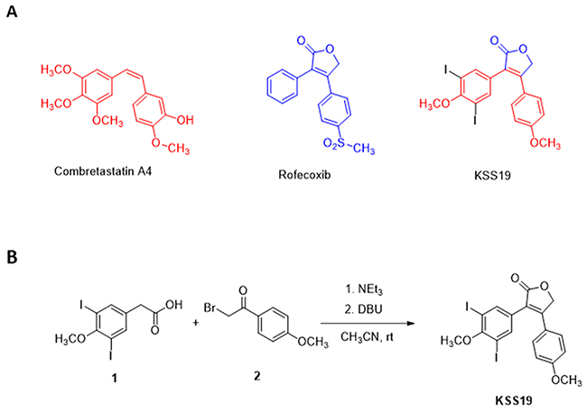 Chemical Structures of parent drugs and synthesis of KSS19.