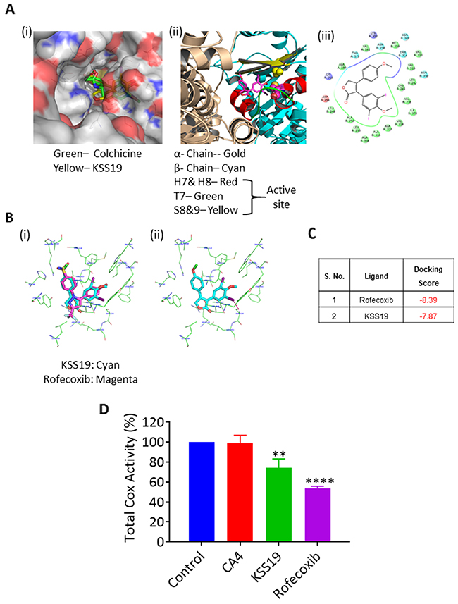 Molecular docking and affinity of KSS19 with tubulin and COX-2 proteins.