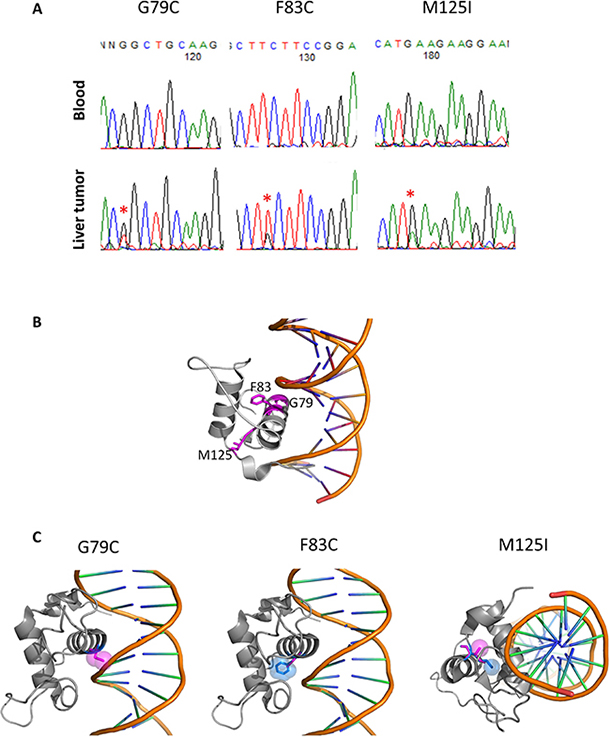 HNF4A mutations in liver cancer and their 3D structures.