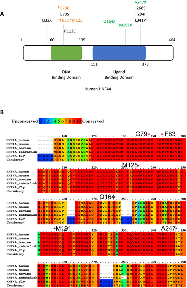 Positions of HNF4A mutations in liver cancer.