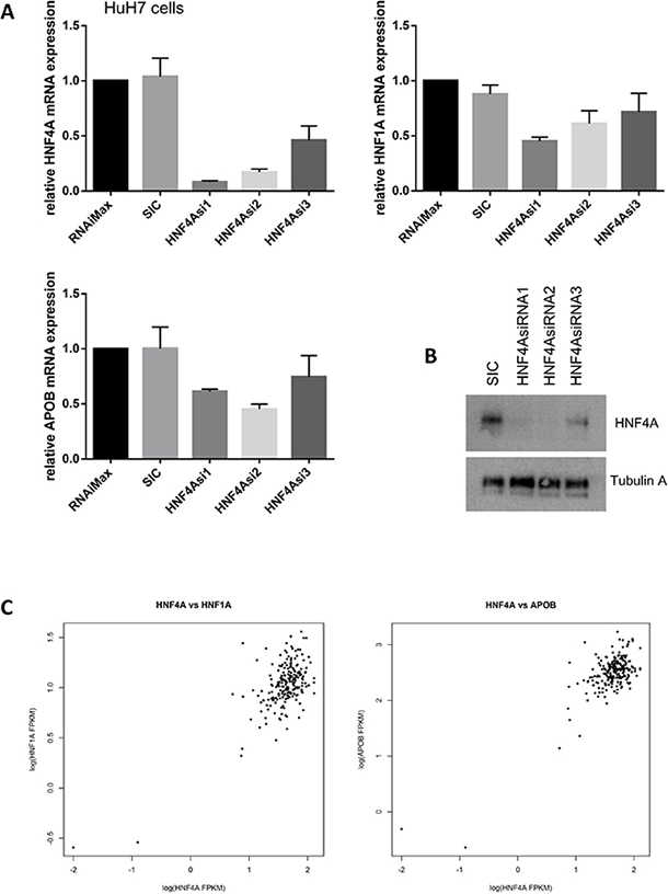 HNF4A expression is highly correlated with HNF1A and APOB expression.