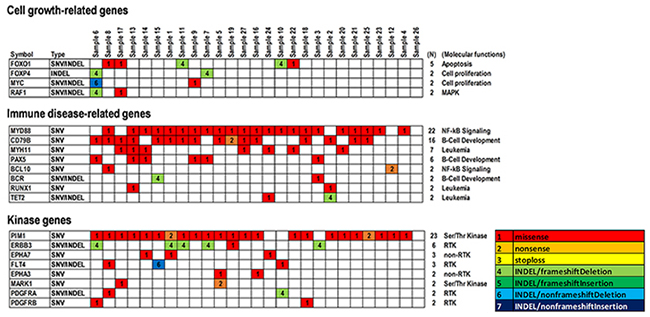 Summary of significant SNVs and INDELs detected in genes related to cell growth and immune disease and kinase genes in PCNSLs.