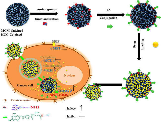 Schematic representation of the prepared nano-system from preparation, internalization, and anticancer mechanism of action in human liver carcinoma (HepG2) cells.