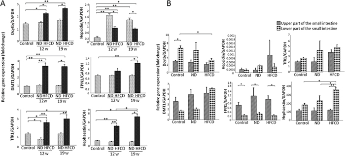 Real-time RT-qPCR analysis of the expression of iron metabolism-related genes (IMGs) in the liver and small intestine of SHRSP5 rats from the high fat, high cholesterol-containing diet (HFCD) or normal diet (ND) groups.