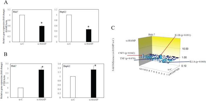 Effects of knockdown of hepcidin antimicrobial peptide (HAMP) on ferritin and toll-like receptor (TLR)-associated gene expression in human hepatoma cell lines.