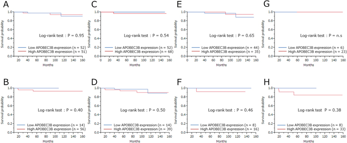 Breast cancer–specific survival (BCSS) according to APOBEC3B mRNA expression among the different subtypes.