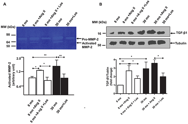 Ang II, MMP-2 and TGF-β1 activation in VSMCs.
