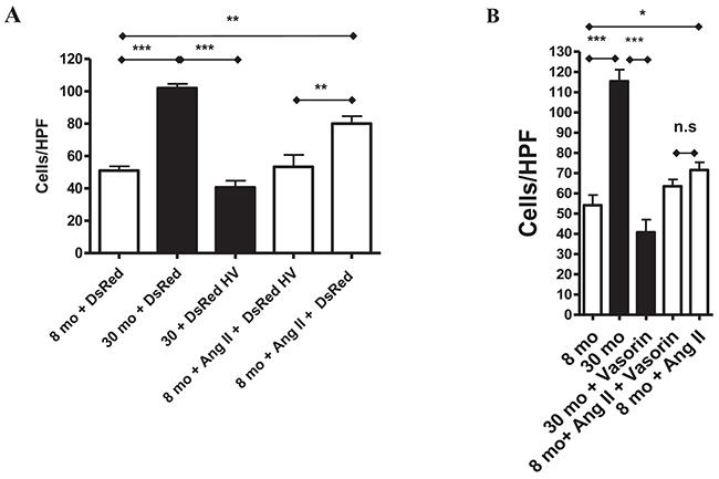 Vasorin decreases both Ang II- and aging-associated phenotypic shift of VSMCs into invasiveness.