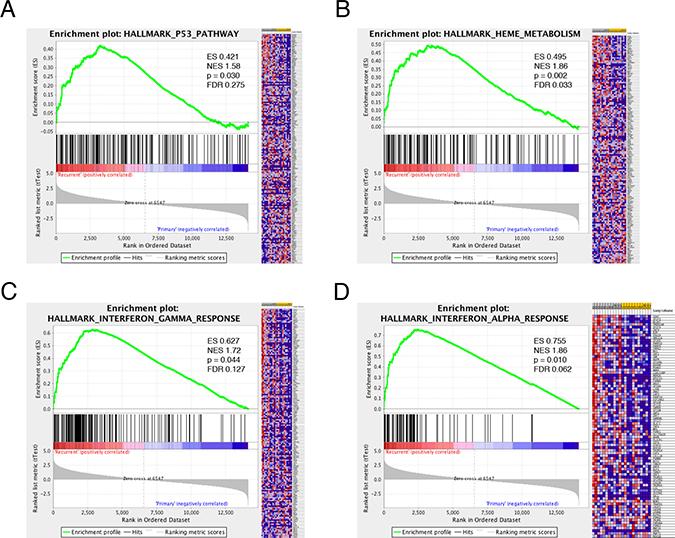 Gene Set Enrichment Analysis (GSEA) in recurrent glioma.