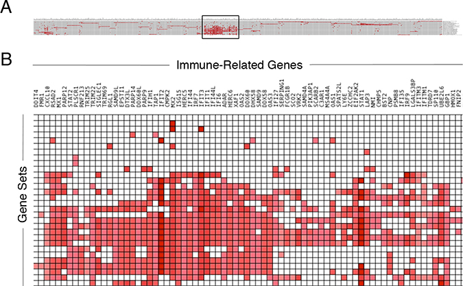 Immune-related genes associated with recurrent glioma.
