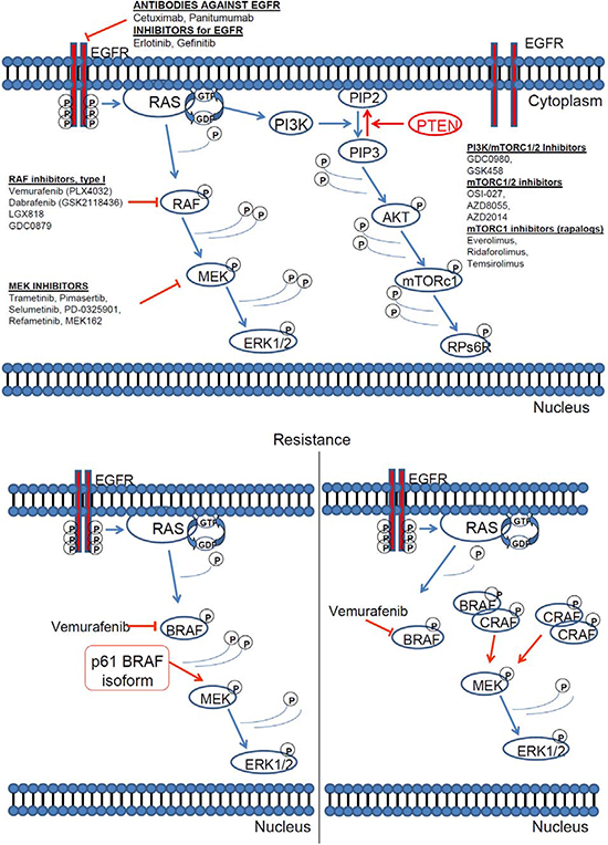RAS pathway inhibitors and resistance mechanisms.