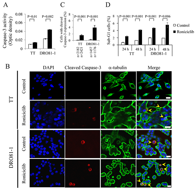 Roniciclib stimulates caspase-3 activity and causes apoptosis in MTC cells.