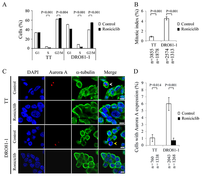 Roniciclib decreases the level of Aurora A and accumulates cells in G2 phase in MTC cells.