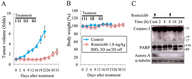 Roniciclib inhibits subcutaneous xenograft growth of a MTC model.